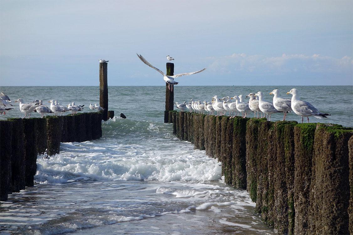 http://www.wigwamhotel.nl/wordpress/wp-content/gallery/domburg/hotel-thewigwam-in-domburg_DSC01859.jpg?88141